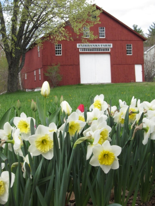 Red Barn with Flowers -- Spring 2011